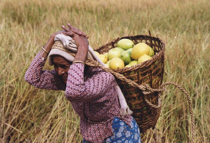 Agriculture is the main source of food, income, and employment for the majority of people in Nepal.