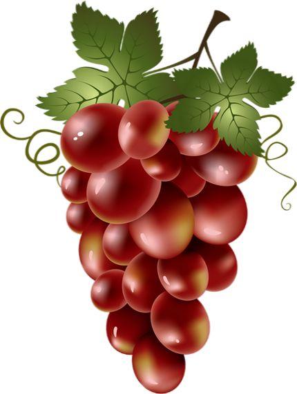 Winogrona: Tube - Winogrona - Trauben - Uvas png