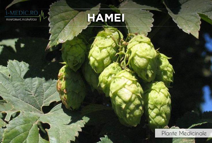 Hameiul este util in ameliorarea simptomelor de anxietate, insomnii, tensiune emotionala, deficit de atentie si hiperactivitate (ADHD), cresterea apetitului sau indigestie. http://www.i-medic.ro/plante/hamei