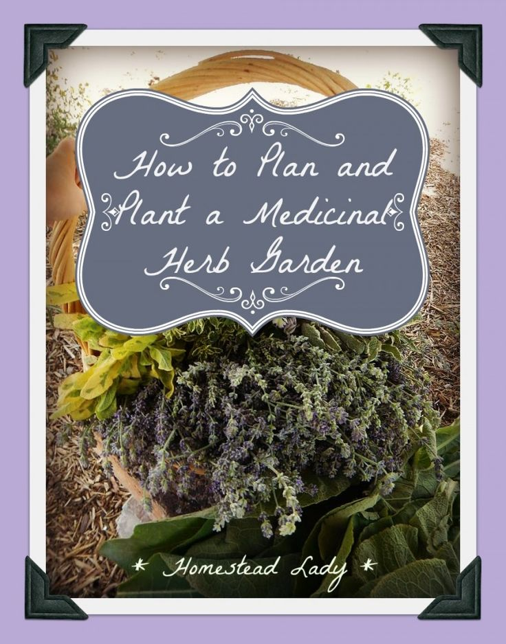 How to plan and plant a medicinal herb garden - www.homesteadlady.com