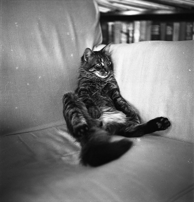 Good Will, Hemingway's Angora tiger cat, in chair at Finca Vigia.