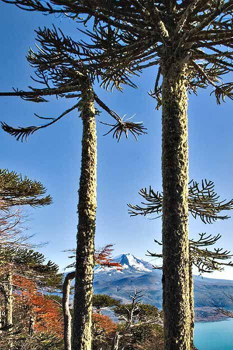 South America, above Lago Conguillio, Conguillio National Park, IX Region, Chile