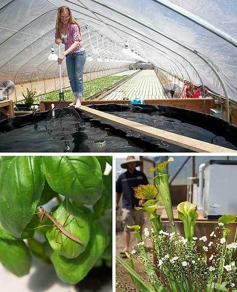 17 best images about hydroponics aquaponics aeroponics for Aquaponics fish food