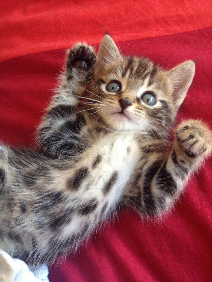 chaton                                                                                                                                                                                 Plus