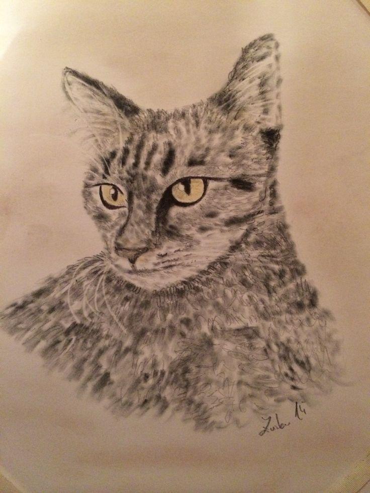 Kresba kočky tužkou a pastely od Zuzky Dušánkové