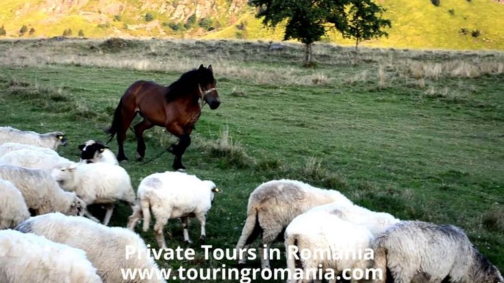 Discover Simplicity of Life in Maramures, Romania ! Private Tours on www...