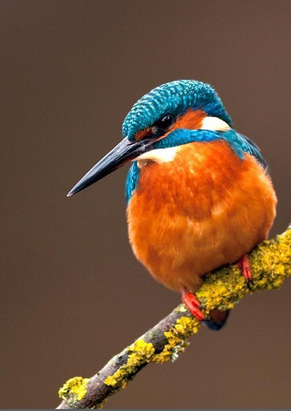 Kingfishers | Stuartpics.co.uk - Photography by Geoff Harries