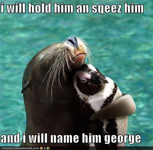 """I love George"" :)Seals, Animal Baby, Best Friends, Sea Lion, Bugs Bunnies, Baby Animal, Penguins, Animal Friends, Sealion"