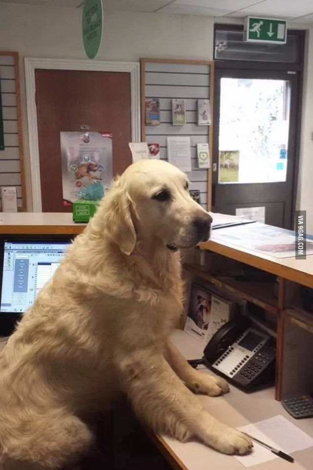 My local vets has a new receptionist