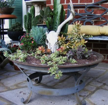 Skulls aren't my favorite, but this is a good way to integrate with the succulents.  Jeff's out-of-the-ordinary containers in Tennessee | Fine Gardening