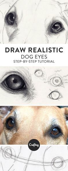 Drawing a realistic dog starts with the eyes! Learn about the structure of a dog's eye and get a step-by-step tutorial for how to draw dog eyes on Craftsy!