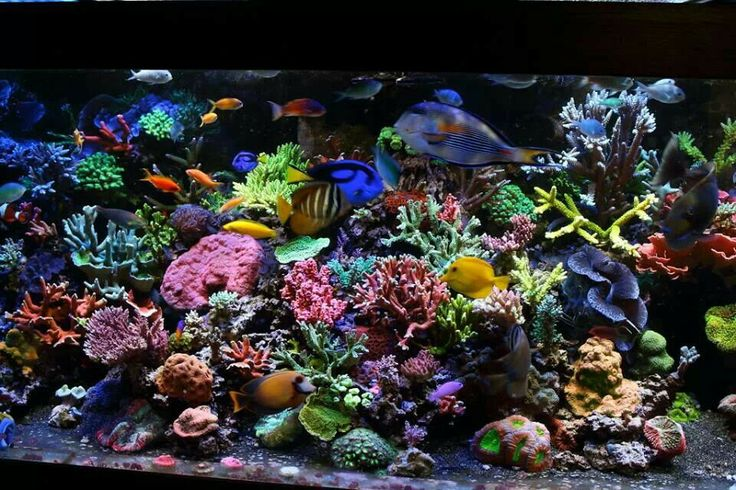 Colorful reef tank gorgeous i saltwater tanks for Saltwater fish tank