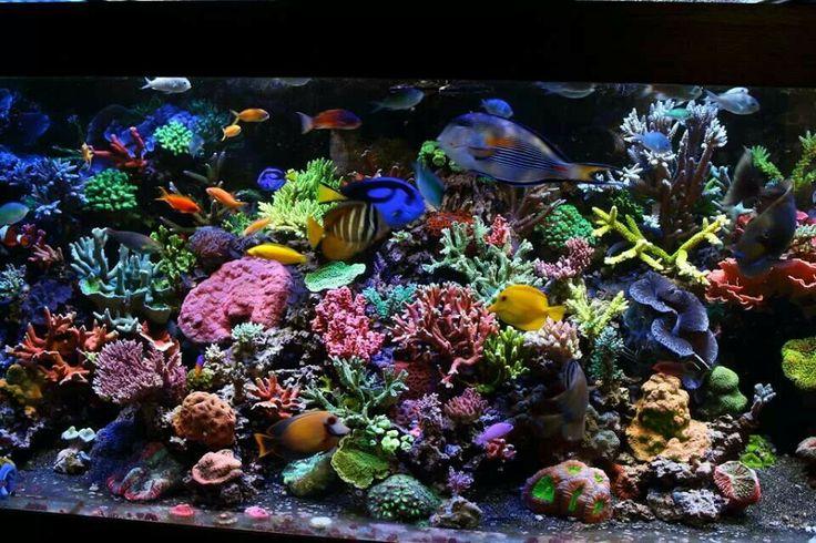 Colorful reef tank- Gorgeous!: Amazing Aquarium, Naturalist Tanks ...