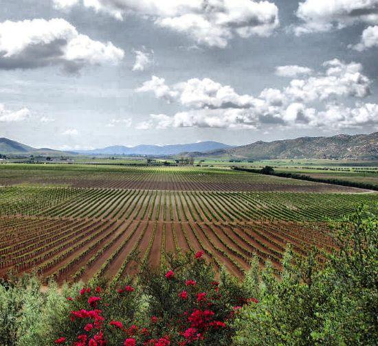 La ruta del vino del queso es un recorrido a través de los valles de Guadalupe, Calafia, de las Palmas y Ojos Negros; todos reconocidos internacionalmente por la calidad de sus vinos.