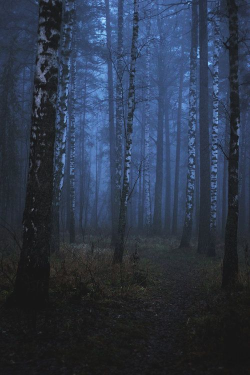 Into the fog by Hinkz: Birches, Walks, Beauty Nature, Blue Color, Into The Woods, Will, Dark Side, Dark Forests Finland, Forests Nature
