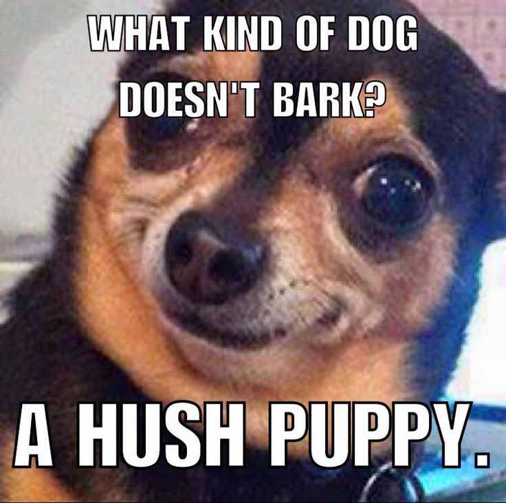 Haha this made us laugh #DogsLifeMag