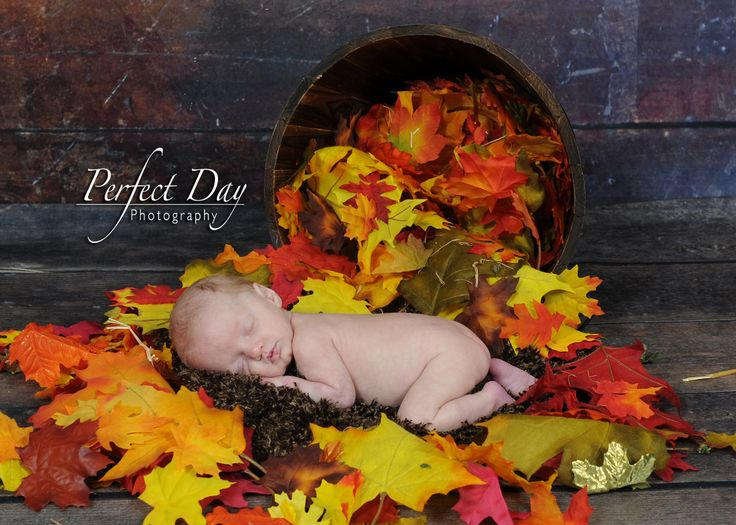 Newborn baby newborn photographer newborn photography newborn fall leaves perfect day photography