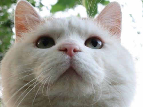 猫の鼻と口の「ω」の部分はひげぶくろなどと呼ばれたりしますが、正式名称はウィスカーパッドというそうです。
