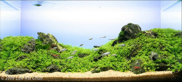 2006 AGA Aquascaping Contest - Entry #43