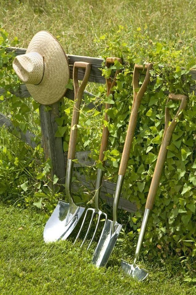1000 images about vegetable garden on pinterest gardens for Vegetable garden tools