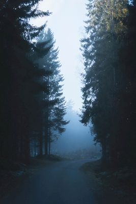 Mystical foggy road in the evening. Photographer is Elias Assar Gustafsson, motif is available as poster at printler.com, the marketplace for photo art.