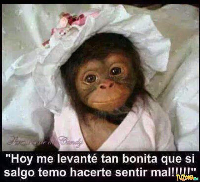 Changuitas Chistosas Monos Chistosos Fotos De Monos Graciosos