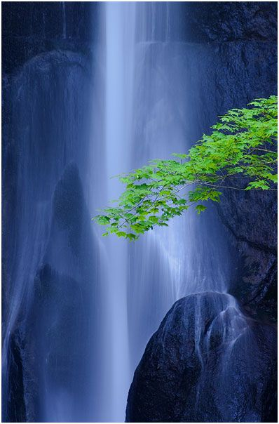 Wonderful vision....magic...: Bonsai Trees, Angel Wings, Beautiful Waterfalls, Blue, Color, Green, Trees Branches, Places, Cool Photos