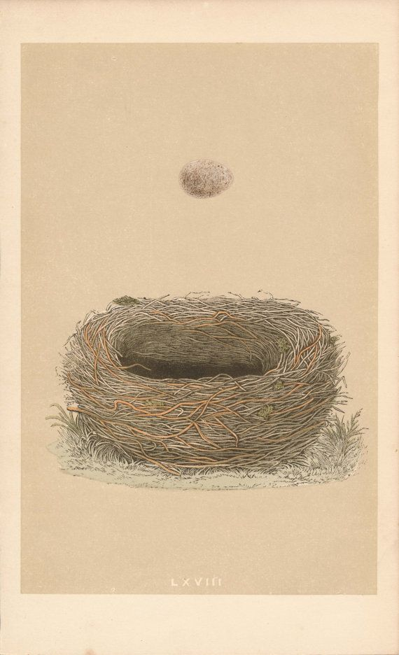 1859 Bird Egg Antique Print Meadow Pipit by Figure10 on Etsy