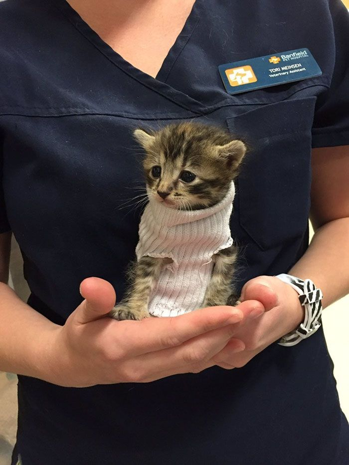 A Raleigh, nella Carolina del Nord,un gattino è stato salvato dalla violenza devastante dell'uragano Matthew. Impaurito e tremante per il freddo, il cucciolo di appena 3 o 4 settimane è stato soccorso da alcuni volontaried ospitato nelcentro veterinariolocale Banfield Pet, all'interno di un negozio per animali PetSmart. Il tenero gattino è stato adottato da una...
