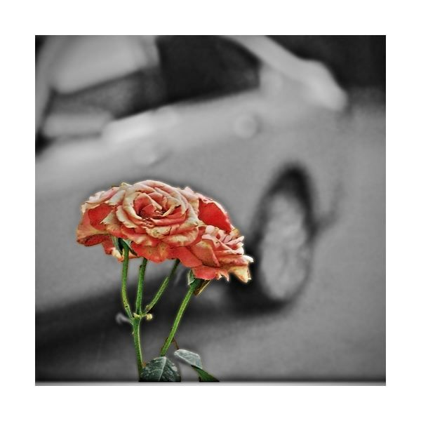 Selective Colorization Photos in Adobe Photoshop Elements