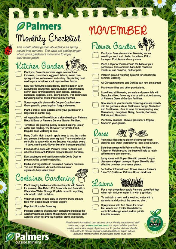 November Gardening Nz Tips Plant Your Favourite Summer Veges Now