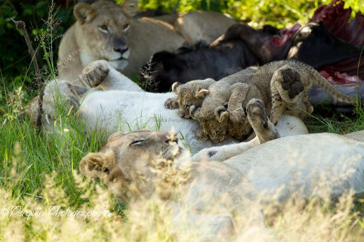 Welgevonden game reserve, Johannesburg, South Africa