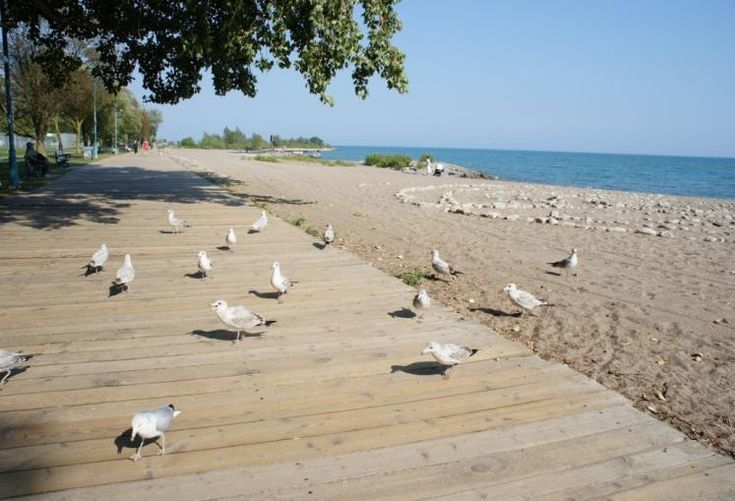 The Beaches Boardwalk, Toronto. Usually more people than seagulls!