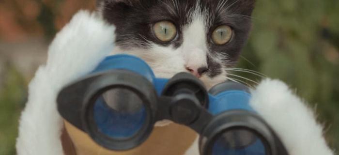 Dupla felina resgata filhote cercado por mortos-vivos em Cats vs. Zombies - No último dia 11 aconteceu a estreia da segunda temporada de Z Nation no canal Syfy americano. Contribuindo com a divulgação da série, o canal Mr.TVCow, do YouTube, lançou o vídeo Cats vs. Zombies, reproduzido …