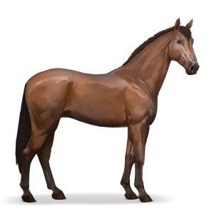horse kwpn bay