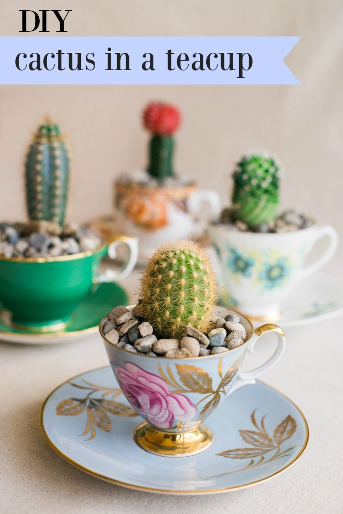 DIY Cactus in a Teacup