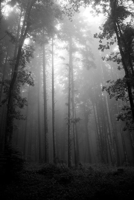 Early morning in the great Carpathian forest