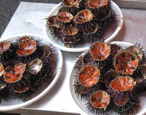 Bogamari Cucina Marinara -Trattoria di Pesce - | ボガマリ・クチーナ・マリナーラ 〜魚介専門のトラットリア〜