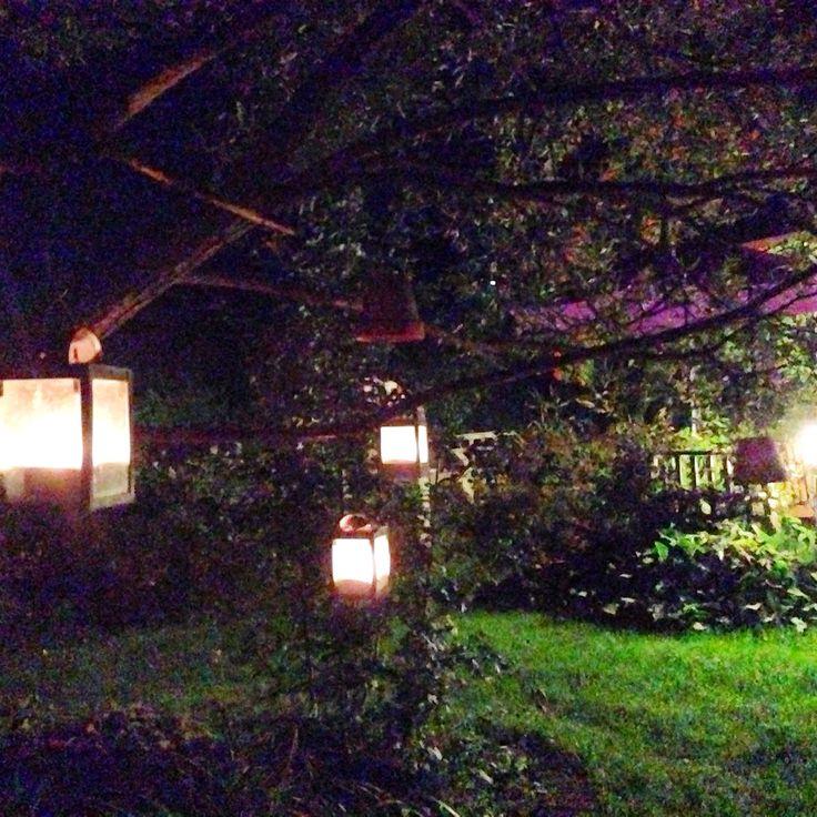 Syksyinen puutarha 2014