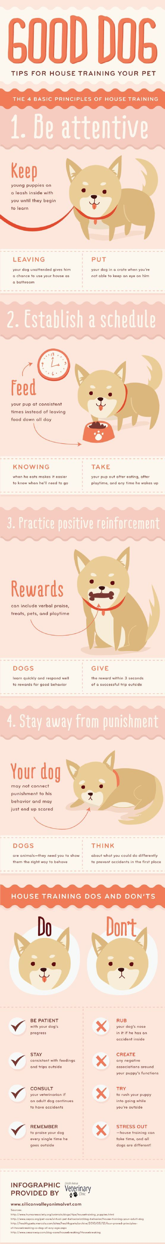 Tips For House Training Your Dog - Browse this infographic for tips on how to house train your dog.