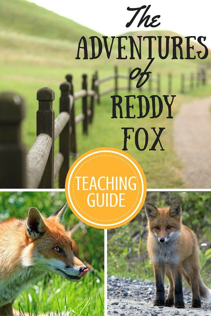 Homeschool and Classroom Activity and Lesson Ideas for The Adventures of Reddy Fox by Thornton W. Burgess / Moral Lessons for Kids / Children Stories with Morals / Character Traits