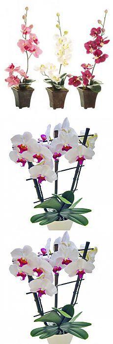 Орхидея будет цвести больше 6 месяцев, если ее так поливать.