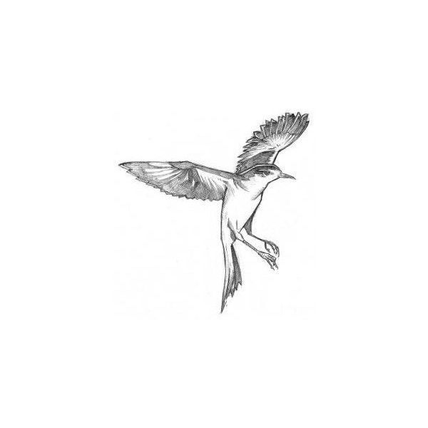 Mockingbird Tattoo Designs Ben Towle Cartoonist, Educator, Hobo ❤ liked on Polyvore featuring accessories, body art, animals, fillers, game of thrones and tattoos