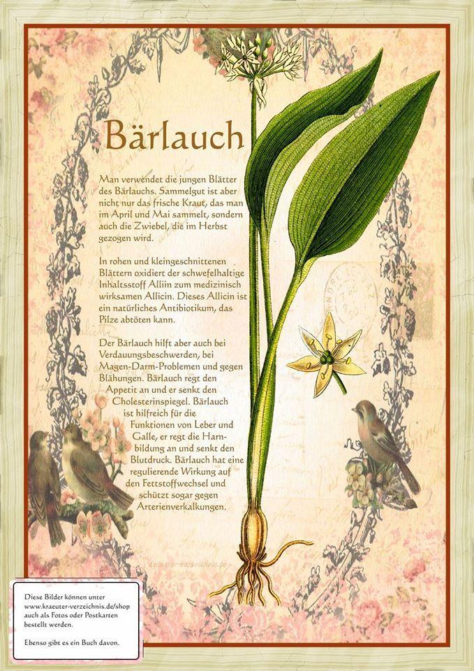 Bärlauch http://www.kraeuter-verzeichnis.de/