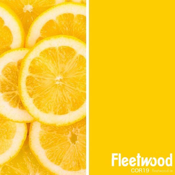 Applying 16 Bright Kitchen Paint Colors: 16 Best Benjamin Moore Bleeker Beige Images On Pinterest
