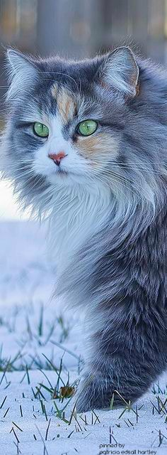 Beautiful cat……….HE TOLD ME NEXT TIME HE HOPES HE DOESN'T FORGET HIS…