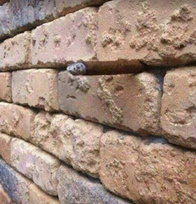 O que há nessa parede de tijolos, Sherlock? Elementar, meu caro Watson...