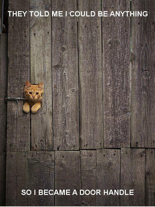 : Doors, Cats, Kitty Cat, Kitten, Animals, Peek A Boo, Door Handle