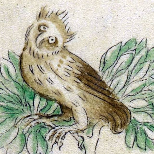 Owl. Queen Mary Psalter, London 1310-1320 (British Library, Royal 2 B VII, fol. 128v)