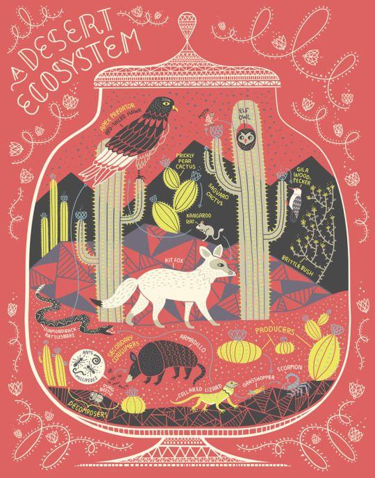 RACHEL IGNOTOFSKY DRAWS. Dessert ecosystem. Sand, animals, cactus, wildlife.